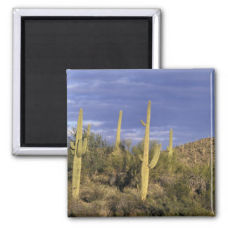 Mexico, Baja del Norte, Catavina Desert National 2 2 Inch Square Magnet
