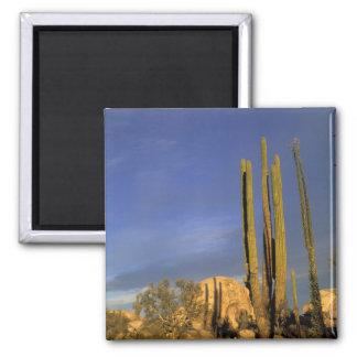 Mexico, Baja del Norte, Catavina Desert National 2 Inch Square Magnet