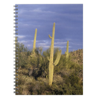 Mexico, Baja del Norte, Catavina Desert National 2 Notebook