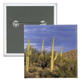 Mexico, Baja del Norte, Catavina Desert National 2 Pinback Button