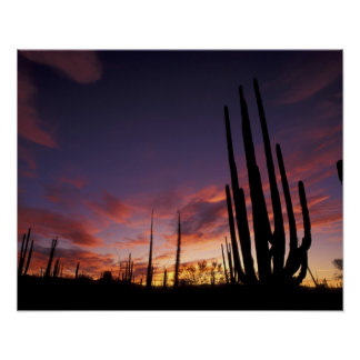 Mexico, Baja del Norte, Catavina Desert National 3 Poster
