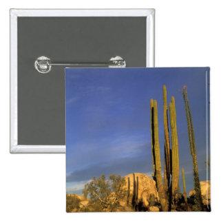 Mexico, Baja del Norte, Catavina Desert National Pinback Button