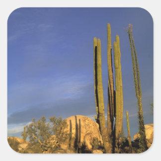 Mexico, Baja del Norte, Catavina Desert National Square Sticker