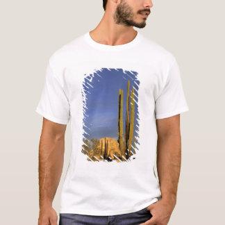 Mexico, Baja del Norte, Catavina Desert National T-Shirt