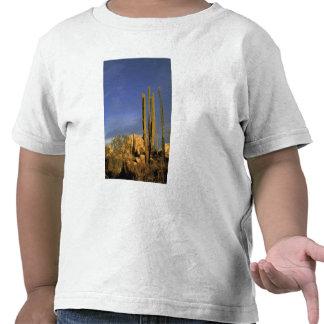 Mexico, Baja del Norte, Catavina Desert National Shirt