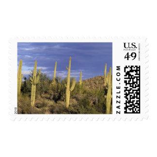 México, Baja del Norte, nacional 2 del desierto de Franqueo