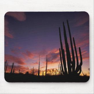 México, Baja del Norte, nacional 3 del desierto de Mouse Pad