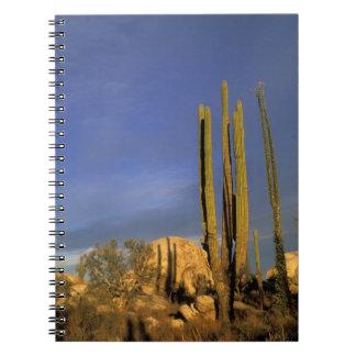México, Baja del Norte, nacional del desierto de C Cuadernos