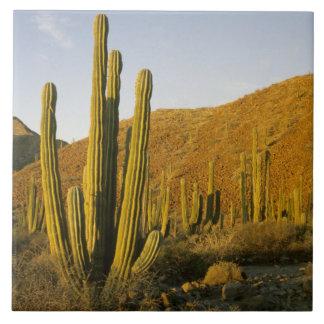 México, Baja, isla de Santa Catalina, mar de Azulejo Ceramica