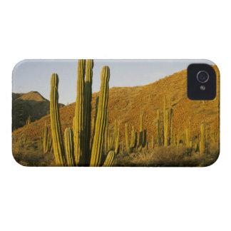 México, Baja, isla de Santa Catalina, mar de iPhone 4 Case-Mate Cárcasas