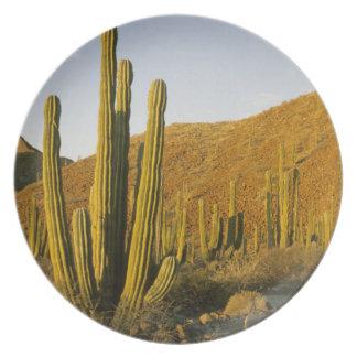 México, Baja, isla de Santa Catalina, mar de Plato De Cena