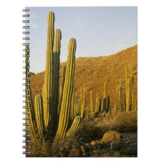 México, Baja, isla de Santa Catalina, mar de Spiral Notebook