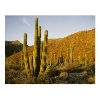 México, Baja, isla de Santa Catalina, mar de Tarjetas Postales
