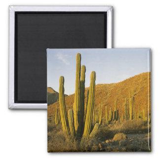 Mexico, Baja, Santa Catalina Island, Sea of 2 Inch Square Magnet