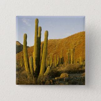 Mexico, Baja, Santa Catalina Island, Sea of Pinback Button