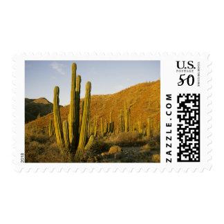 Mexico, Baja, Santa Catalina Island, Sea of Postage