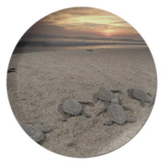 Mexico, Chiapas, Boca del Cielo Turtle Research Melamine Plate