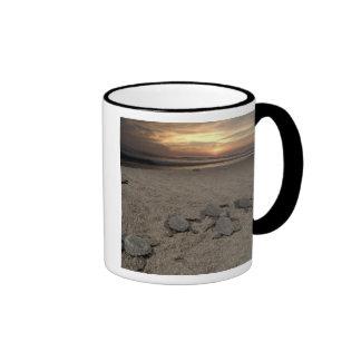Mexico, Chiapas, Boca del Cielo Turtle Research Coffee Mug