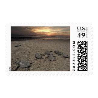 Mexico, Chiapas, Boca del Cielo Turtle Research Stamp