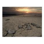 Mexico, Chiapas, Boca del Cielo Turtle Research Post Cards