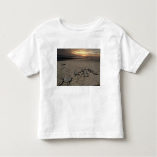 Mexico, Chiapas, Boca del Cielo Turtle Research Toddler T-shirt