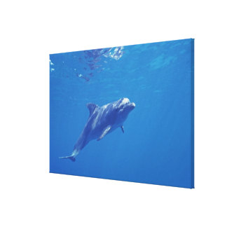 Mexico, Cozumel. Bottlenosed Dolphin Canvas Print