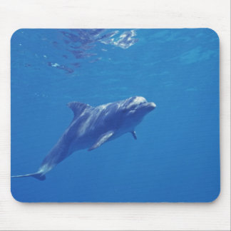 Mexico, Cozumel. Bottlenosed Dolphin Mouse Pad