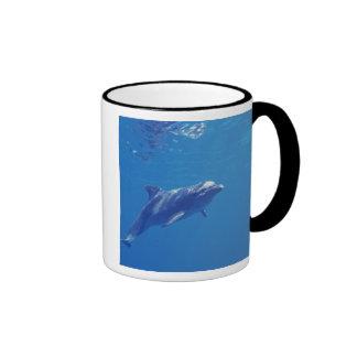 Mexico, Cozumel. Bottlenosed Dolphin Coffee Mug