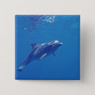 Mexico, Cozumel. Bottlenosed Dolphin Pinback Button