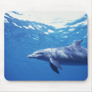 Mexico, Cozumel. Bottlenosed Dolphin, Tursiops 3 Mouse Pad