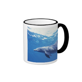 Mexico, Cozumel. Bottlenosed Dolphin, Tursiops 3 Mugs