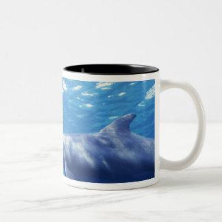 Mexico, Cozumel. Bottlenosed Dolphin, Tursiops 3 Coffee Mug