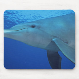 Mexico, Cozumel. Bottlenosed Dolphin, Tursiops 4 Mouse Pad