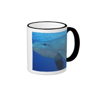 Mexico, Cozumel. Bottlenosed Dolphin, Tursiops 4 Coffee Mug