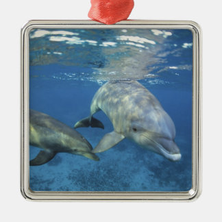 Mexico, Cozumel. Bottlenosed Dolphin, Tursiops 5 Metal Ornament