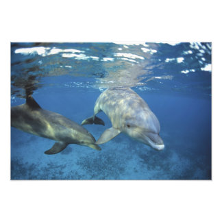 Mexico, Cozumel. Bottlenosed Dolphin, Tursiops 5 Photo Print