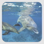 Mexico, Cozumel. Bottlenosed Dolphin, Tursiops 5 Stickers