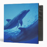 Mexico, Cozumel. Bottlenosed Dolphin, Tursiops Binders