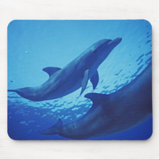 Mexico, Cozumel. Bottlenosed Dolphin, Tursiops Mouse Pad