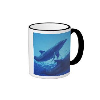 Mexico, Cozumel. Bottlenosed Dolphin, Tursiops Mugs