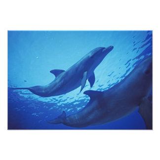 Mexico, Cozumel. Bottlenosed Dolphin, Tursiops Photo Print