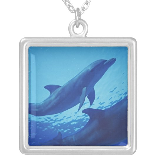 Mexico, Cozumel. Bottlenosed Dolphin, Tursiops Silver Plated Necklace