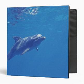 """México, Cozumel. Delfín de Bottlenosed Carpeta 1 1/2"""""""