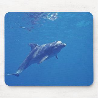 México, Cozumel. Delfín de Bottlenosed Mousepad