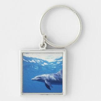 México, Cozumel. Delfín de Bottlenosed, Tursiops 3 Llavero Cuadrado Plateado