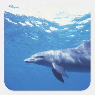 México Cozumel Delfín de Bottlenosed Tursiops 3 Pegatinas Cuadradas