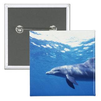 México, Cozumel. Delfín de Bottlenosed, Tursiops 3 Pin Cuadrado