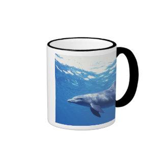 México, Cozumel. Delfín de Bottlenosed, Tursiops 3 Taza De Dos Colores