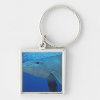 México, Cozumel. Delfín de Bottlenosed, Tursiops 4 Llavero Cuadrado Plateado