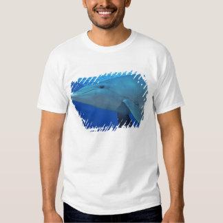 México, Cozumel. Delfín de Bottlenosed, Tursiops 4 Remera